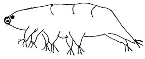 Vic-tardigrade